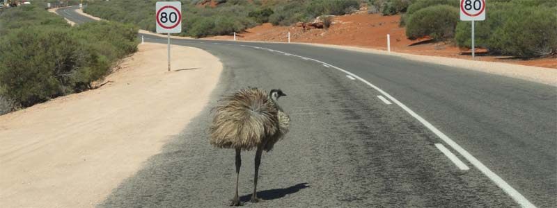 Emu Speed Limit
